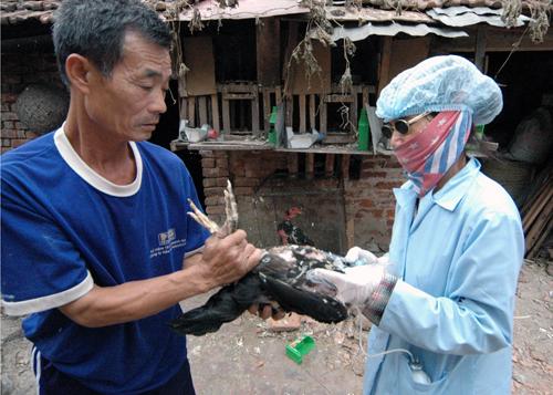 Virut cúm A/H7N9 gây tử vong cho người ở Trung Quốc có gì lạ? 1